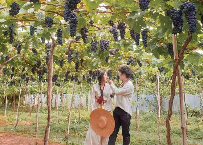 Vườn nho Ba Mọi - mê cung tuyệt đẹp ở Ninh Thuận