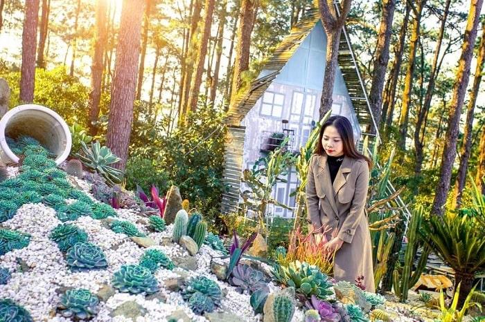 vườn xương rồng - điểm nhấn tại phim trường Sake Garden
