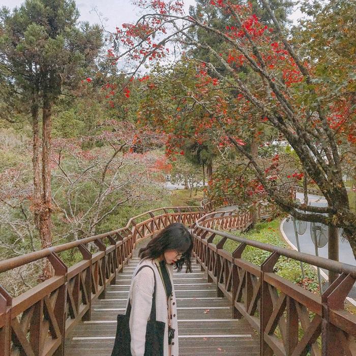 Immerse yourself in the peaceful place of Alishan Taiwan Taiwan mountain