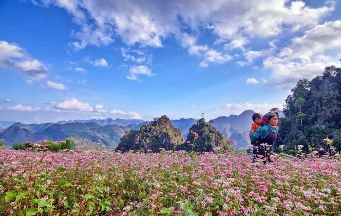 Rộn Ràng Không Khí Lễ Hội Hoa Tam Giác Mạch Hà Giang