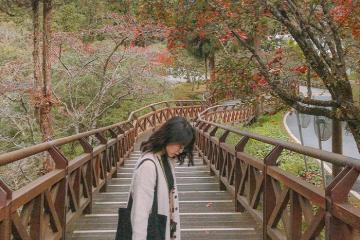Thả mình vào chốn thanh bình núi Alishan Đài Loan