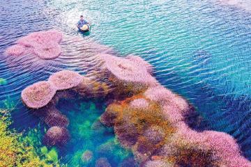 Hồ tảo hồng Bảo Lộc: Thiên đường giữa chốn hoang sơ