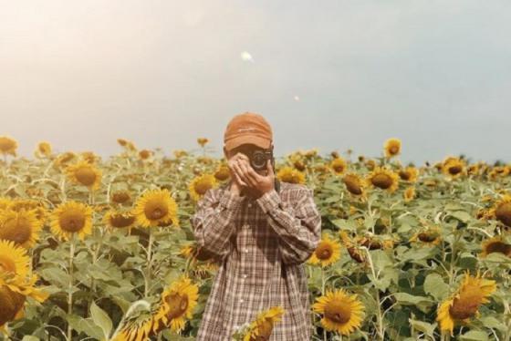 Kinh nghiệm 'săn' mùa hoa hướng dương đẹp nhất tại Nghệ An