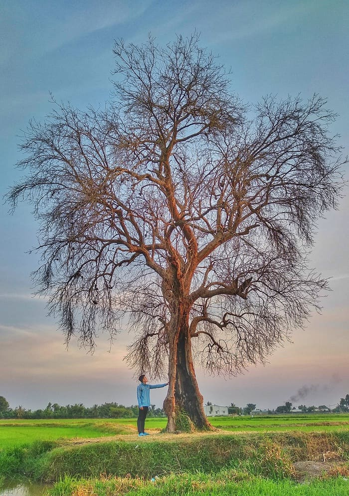 dawn - peaceful scene at Lonely Tree in Tay Ninh