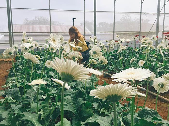 Kinh nghiệm tham quan làng hoa Vạn Thành - Check in làng hoa