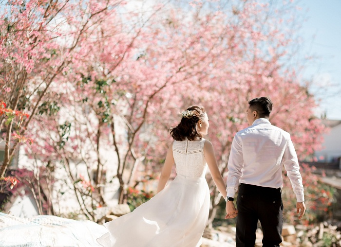 Save now a series of places to see beautiful Dalat cherry blossoms 'heartbreaking'