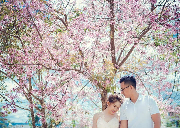 Save now a series of places to see the cherry blossoms in Dalat - Hoang Anh Resort