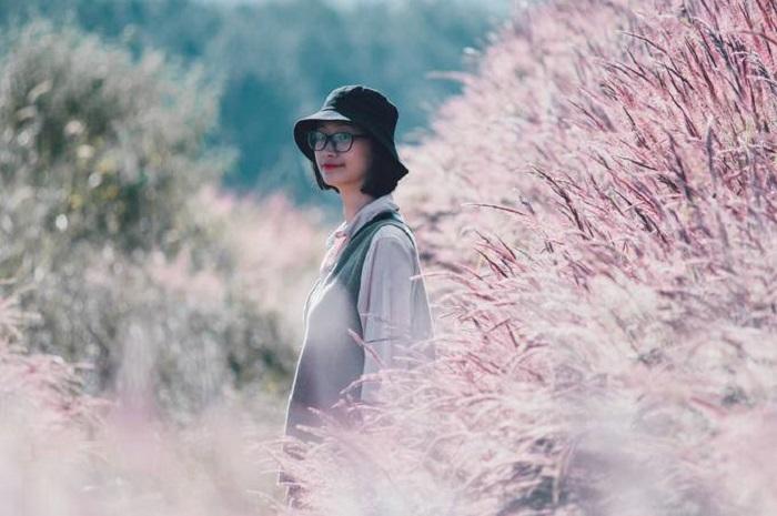 địa điểm du lịch Đức Trọng - đồi cỏ lau hồng Tân Bình rực rỡ