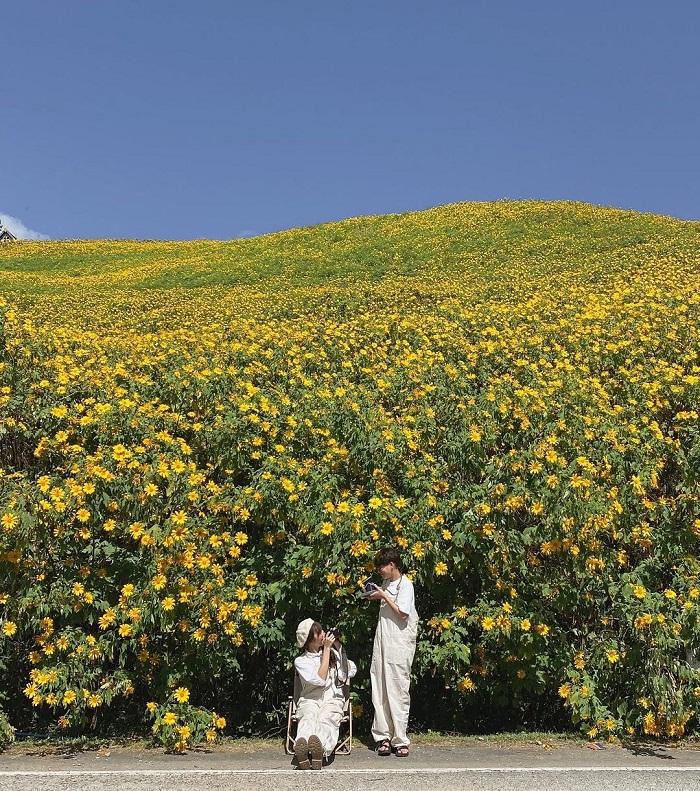Wild sunflower hill in northern Thailand