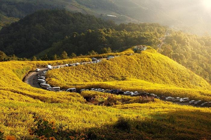 Wild sunflower hill in Thailand