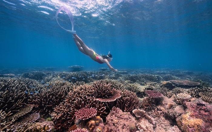 du lịch Côn Đảo từ Hà Nội - lặn ngắm san hô