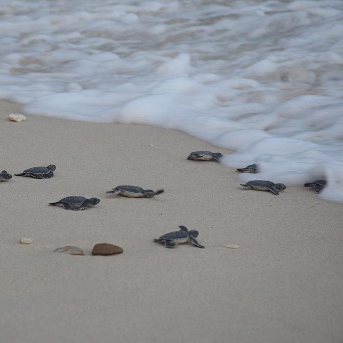 du lịch Côn Đảo từ Hà Nội - xem rùa đẻ trứng