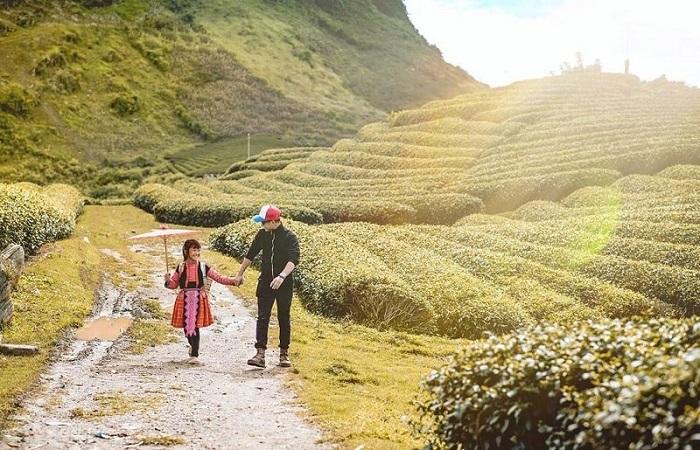 Chùm tour Đông Tây Bắc Tết 2021 - điểm đến đồi chè Mộc Châu