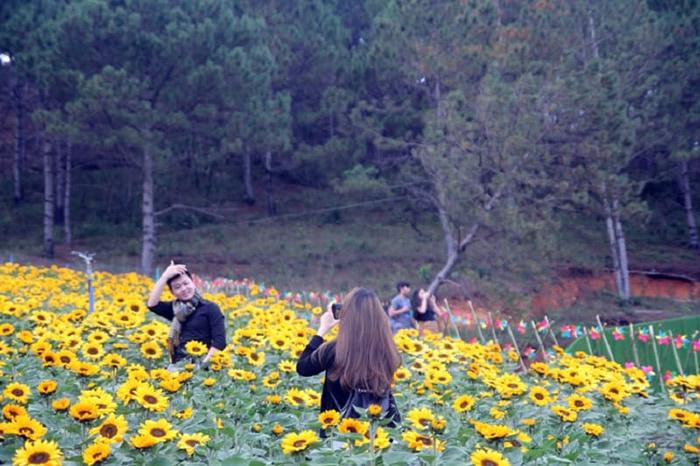 Kinh nghiệm tham quan làng hoa Vạn Thành - Hoa hướng dương khoe sắc