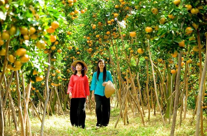 Kinh nghiệm du lịch Bến Tre - khám phá miệt vườn trái cây