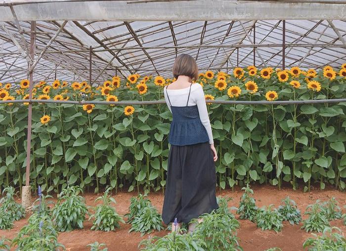 Kinh nghiệm tham quan làng hoa Vạn Thành - cách trung tâm thành phố Đà Lạt khoảng 3km