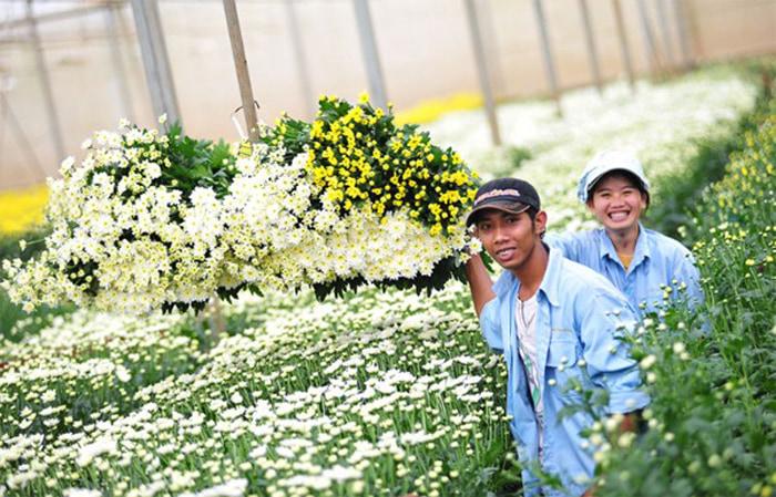 Kinh nghiệm tham quan làng hoa Vạn Thành - Làng hoa nổi tiếng