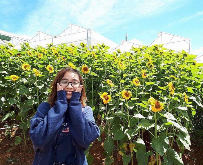 Kinh nghiệm tham quan làng hoa Vạn Thành - Những bông hoa rực rỡ