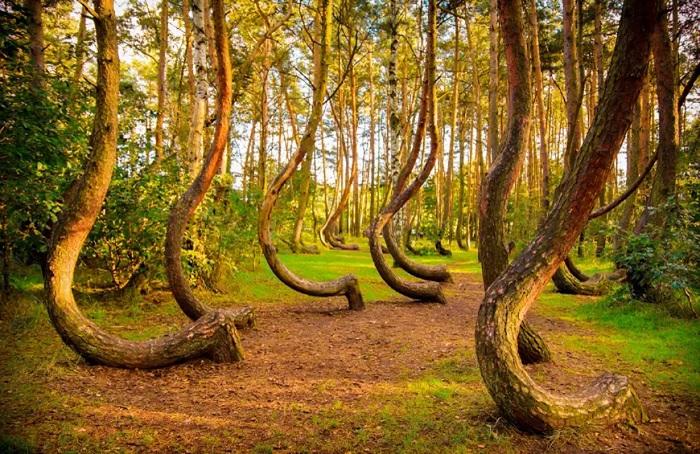Rừng quanh co, Ba Lan - Top những địa điểm bí ẩn nhất trên thế giới