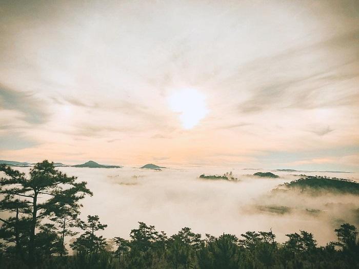 rừng thông đẹp ở Đà Lạt gợi lên bao nỗi nhớ