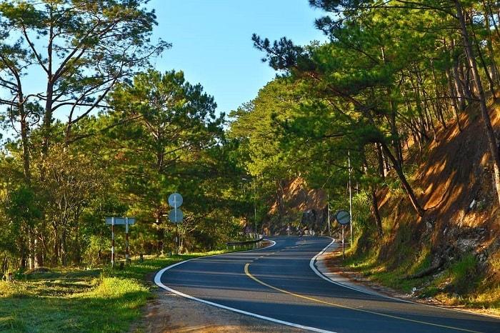 rừng thông đẹp ở Đà Lạt - xanh mát đèo Prenn