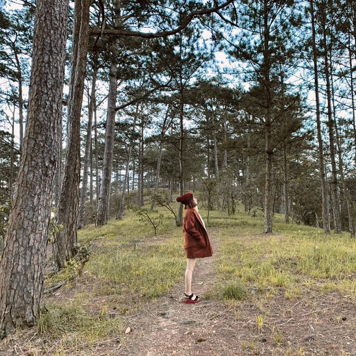 Beautiful pine forest in Da Lat - romantic by Prenn Pass