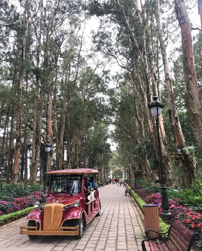 Beautiful pine forest in Da Lat - visit the Palace of Bao Dai I