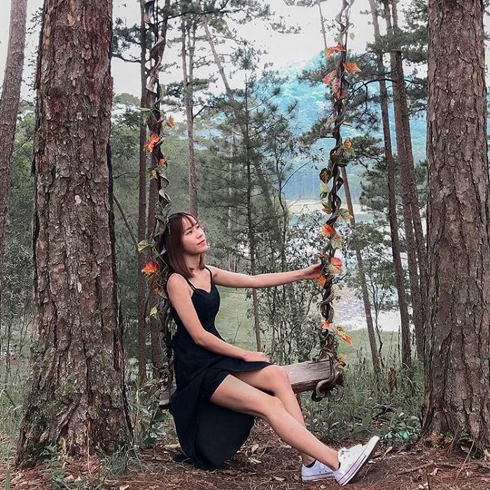 rừng thông đẹp ở Đà Lạt - lãng mạn bên sườn đồi