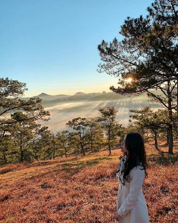 Beautiful pine forest in Dalat - check in with rose grass hill