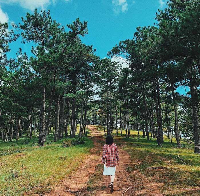 rừng thông đẹp ở Đà Lạt - đường Khởi Nghĩa Bắc Sơn