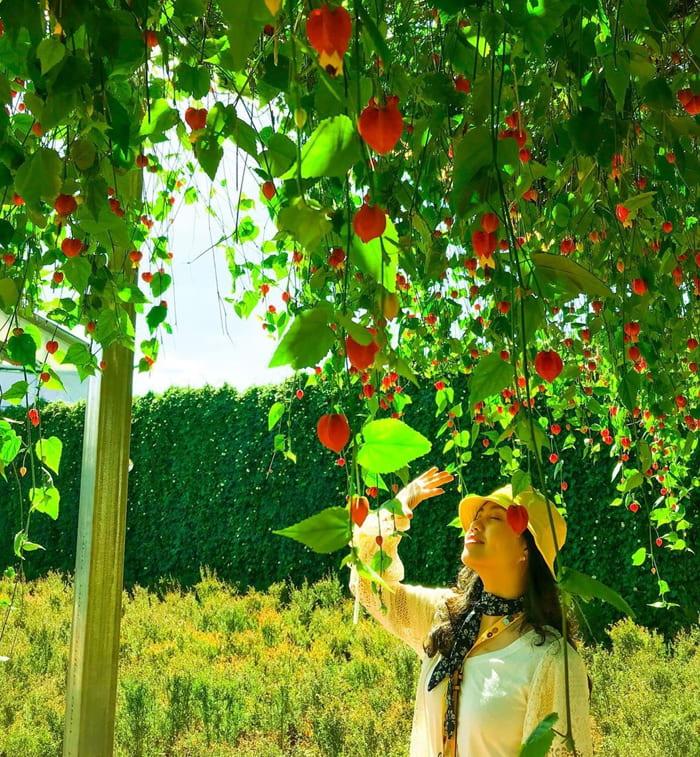 Kinh nghiệm tham quan làng hoa Vạn Thành - Sống ảo không giới hạn