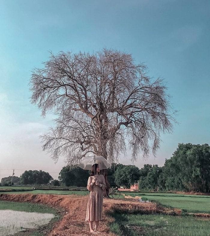 virtual life - important activity at Lonely Tree in Tay Ninh