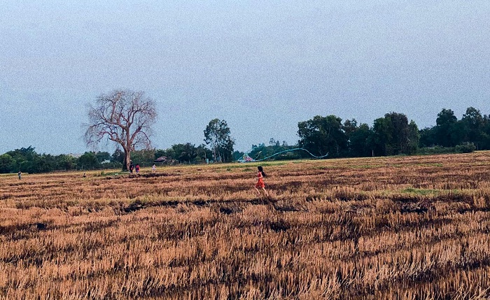 kite flying - exciting activity at the lonely tree in Tay Ninh