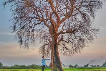 Cây cô đơn ở Tây Ninh – điểm sống ảo khiến giới trẻ 'sốt rần rần'