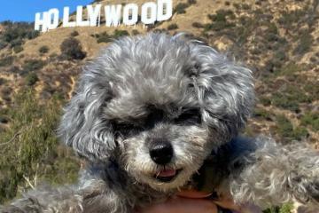 Check list những địa danh chụp ảnh cực phẩm ở Los Angeles