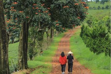 Mách bạn kinh nghiệm du lịch Bảo Lộc Lâm Đồng chi tiết từ A đến z