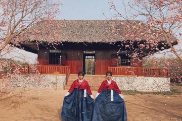 Ngỡ lạc đến mùa xuân Hàn Quốc tại Thủy Hoa Viên Tây Ninh