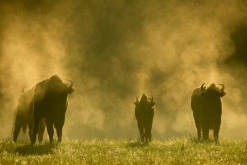 Khám phá rừng Bialowieza Ba Lan - khu rừng nguyên sinh cuối cùng của châu Âu