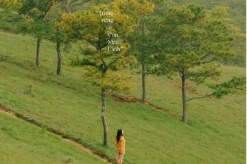 Check in những rừng thông đẹp ở Đà Lạt lãng mạn và bình yên