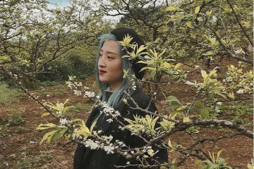 Đến thung lũng mận Nà Ka Mộc Châu check in với hoa và hái mận trĩu quả