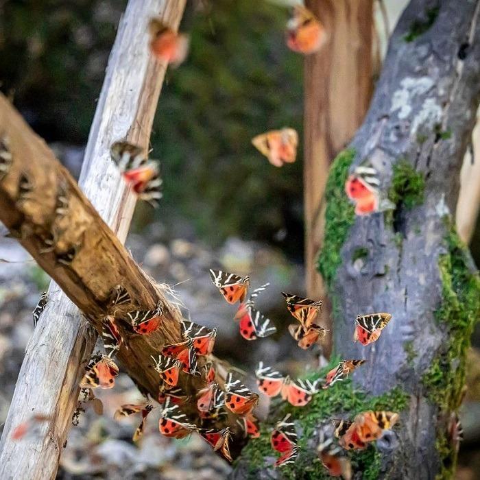 thung lũng bướm là thung lũng kỳ lạ ở Thổ Nhĩ Kỳ tuyệt đẹp