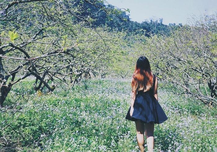 thung lũng mận Nà Ka - lạc vào những khu vườn hoa trắng