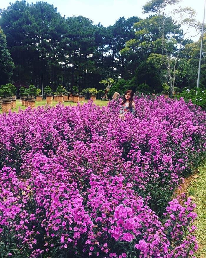 Dalat golden valley - brilliant flower gardens