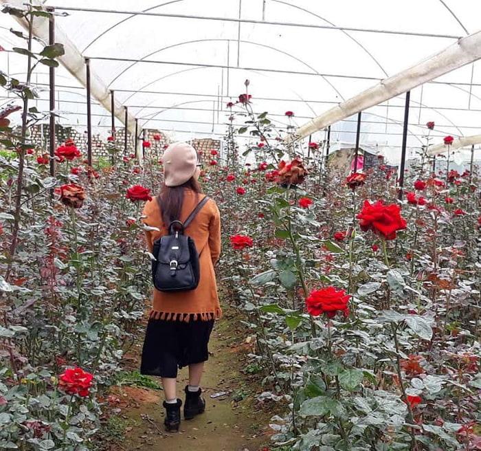 Kinh nghiệm tham quan làng hoa Vạn Thành - Tuân thủ nội quy khi ngắm hoa