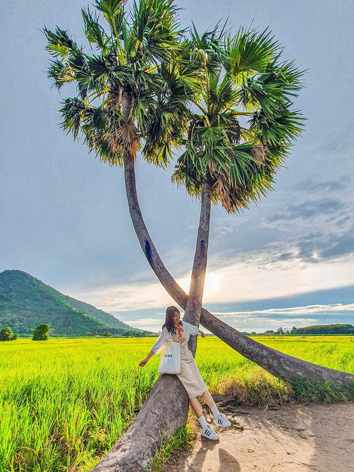 Twins palm tree - check-in point near lonely tree in Tay Ninh