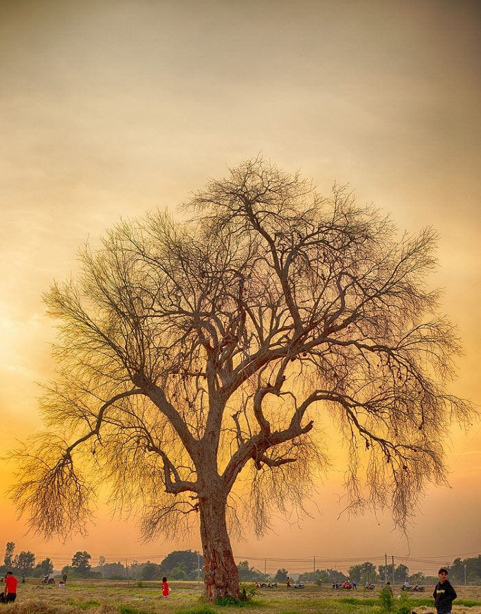 sunset - the ghostly beauty of the Lonely Tree in Tay Ninh