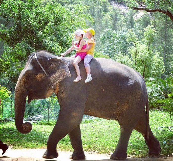 Elephant riding at Hoa Lan Stream - one of the tourist resorts in Nha Trang 'singing the island'