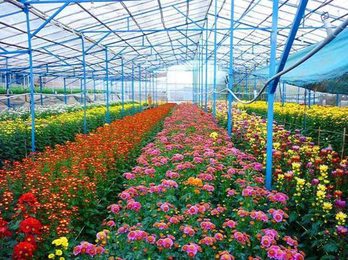 Kinh nghiệm tham quan làng hoa Vạn Thành - ngập tràn sắc hoa
