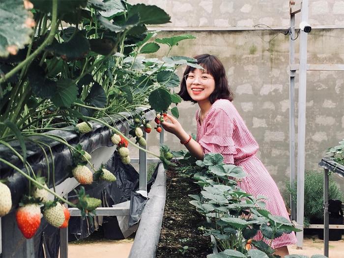 Kinh nghiệm tham quan làng hoa Vạn Thành - Vườn dâu tây ngon khó cưỡng