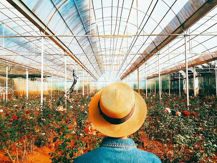 Kinh nghiệm tham quan làng hoa Vạn Thành - Vườn hoa lung linh